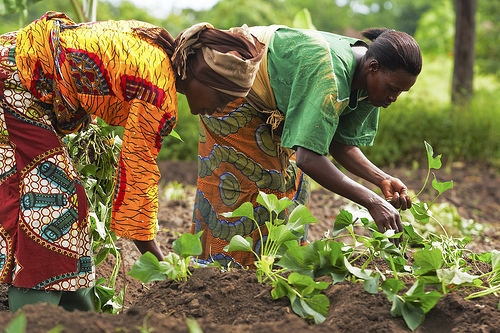 'EU,UNIDO Commits to developing Nigeria's agro- Industrial sector'