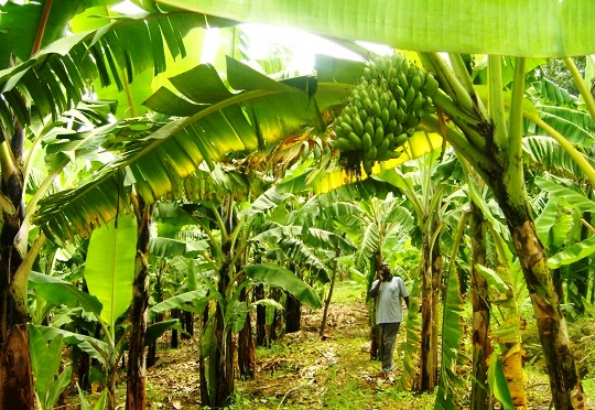 Experts say Nigeria's agric not sustainable due to gross underfunding
