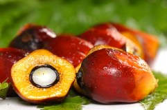 Nigerian Oil Palm Industry 2013
