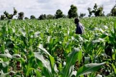 Nigeria registers 15.5m farmers under GES