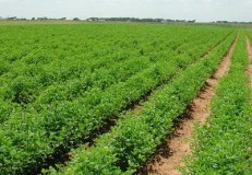 Nigeria's agriculture after 57 years