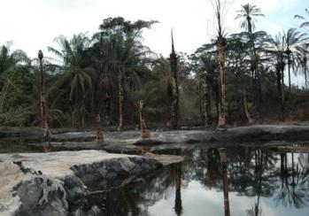 $1bn Ogoni clean-up: FG stalls release of fund, says SPDC, NOSDRA