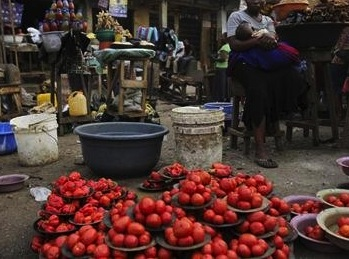 Kano approves N200mn for tomato farmers to procure seedlings
