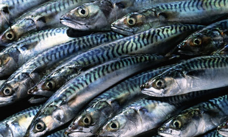Image result for Norway, Nigeria seek more market for fishery products