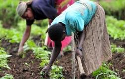 Ogun acquires equipment for farmers under FADAMA 111 project