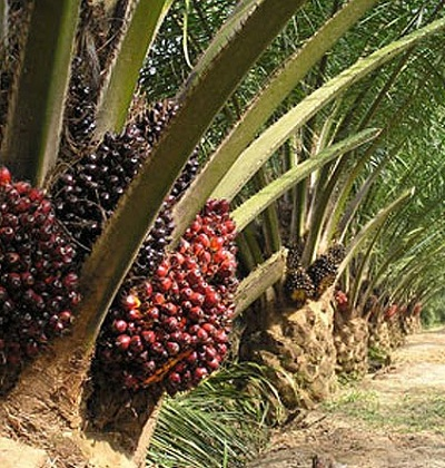 There is no waste in oil palm plantation - Luke Chukwu