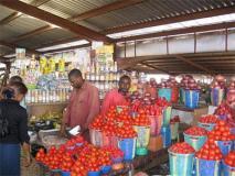 Akwa Ibom looks to vegetable farming as  tomatoes harvest doubles