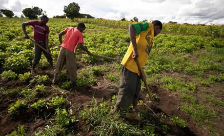 BOA, NIPOST to provide financial services to 5 million farmers – MD