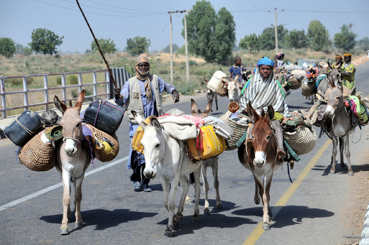PIC. 4. NOMADIC FULANI HERDSMEN AND CHILDREN MIGRATING WITH DONKEYS   ON KIYAWA-JIHUN-GUJUNGU ROAD IN JIGAWA ON SUNDAY (23/12/12).