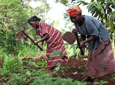 AGRA commits $30 million to support Nigerian farmers