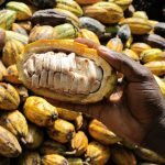 Research institutes discover new seed varieties to plug N525bn gap