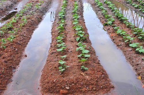 Food Security: FG, World Bank partner on $560 million irrigation project