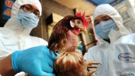 Bird Flu: Kaduna govt. on red alert