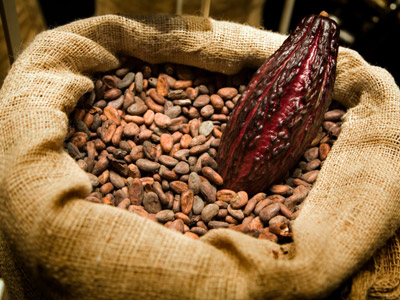 FG targets Cocoa, Sesame seeds, Cashew nuts, Sheer nuts, Pulse exports to earn more forex