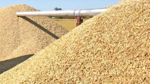 rice-grain