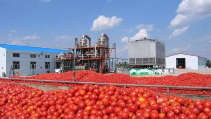 Assessing FX policy and  local tomato industry