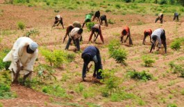 Rice farmers task FG on infrastructure