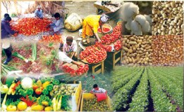 Non-oil exports 6% contribution pushes CBN to float N550bn stimulation fund