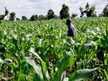 Don't lose the plot – agriculture in the right context