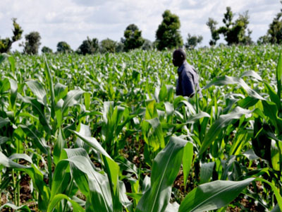 Agriculture: Strong growth but funding remains elusive