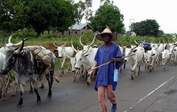 Fulani herdsmen must be reined in as a matter of national urgency