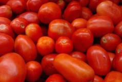 NABG engages stakeholders on tomato price stabilisation, post harvest losses