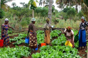 women-agric