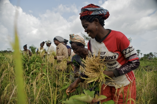 Ebonyi targets 54,000 hectares for dry season farming