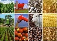 NEPC identifies 13 exportable products to diversify Nigeria's economy