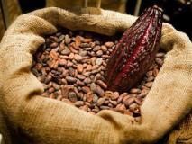 Ondo to raise 5m cocoa seedlings