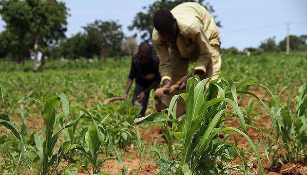 'Smallholder farmers key to food security, economic development'