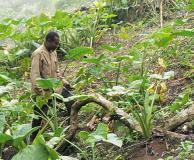 USAID, NESTLE, VEGA, CNFA to train farmers on farming practices