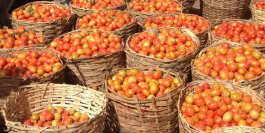 "World Bank assures Plateau farmers on eradication of ""Tuta Absoluta''"