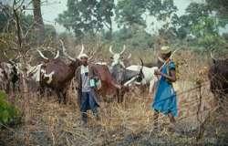 Incessant Fulani herdsmen's killings