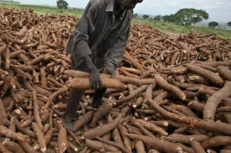 Brazil to train Nigeria Youths, others on Cassava processing