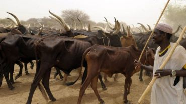 Kebbi Govt. spends N500mn to check cattle rustlers, kidnappers – SSG