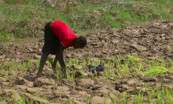 Experts advise youths on necessity of subsistence farming