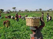 De-risking agro finance to increase lending to farmers