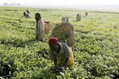 Abx World launches solar powered farmers' mart