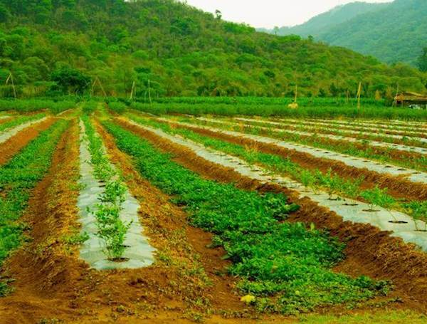 agriculture modern agronomy Fertilization is an important activity in modern agriculture however agronomy —the application of agricultural science to the production of plant and animal.