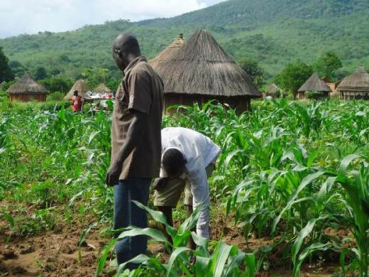 Oyo farmers receive boost as governor distributes land