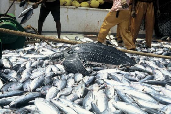 Image result for West Africa loses $2bn annually to unregulated fishing