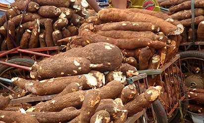 Delta pencils down cassava, palm oil for export