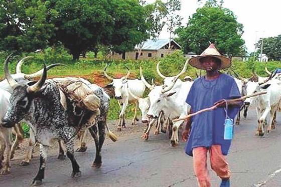 Image result for herdsmen