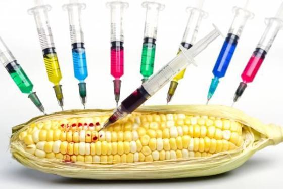 Scientist cautions Nigeria on GMO foods
