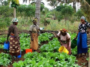 Stemming suicide rate: Don wants FG to revolutionise agriculture to create jobs