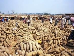 Benue to begin yam export in June – NEPC