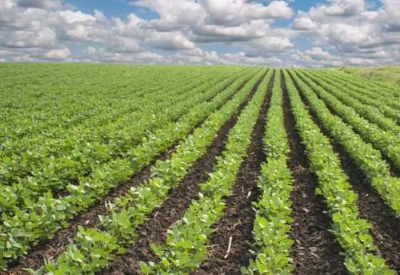 Agriculture, Africa's link to global value chain