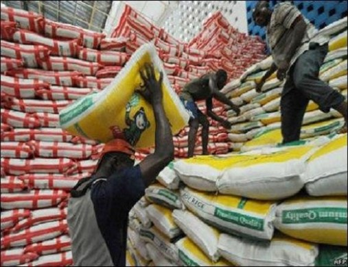 Nigerian can produce enough rice to meet local demand – NCRI Director