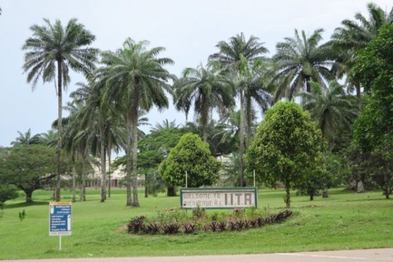 Nigeria's agric institutes lag peers as poor funding hurts output